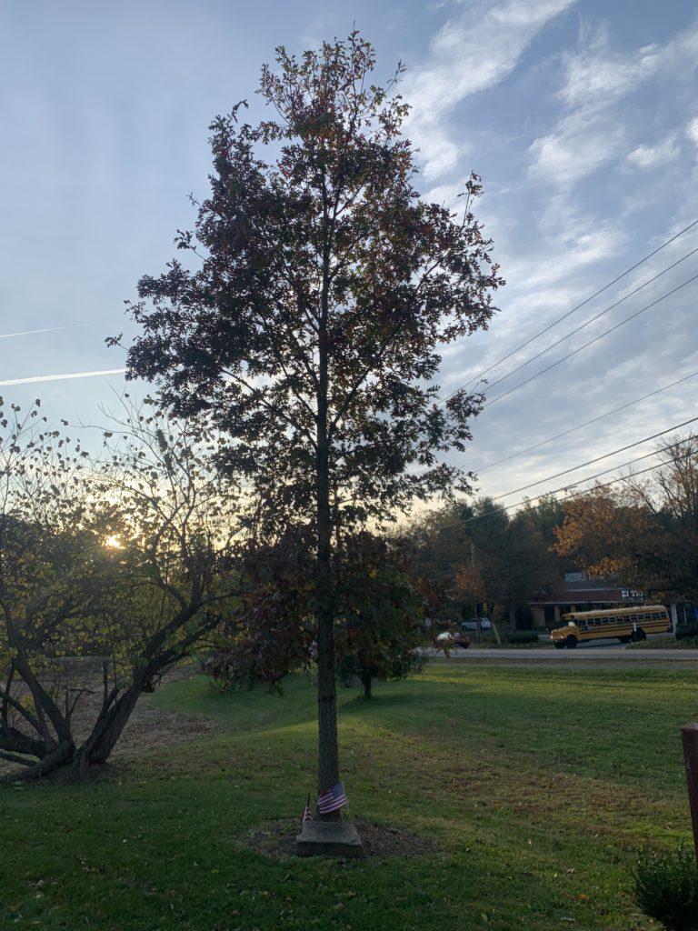 Colonel Pete Hilgartner memorial tree, Election Day at the Great Falls Freedom Memorial, November 3, 2020